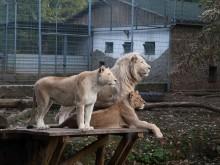Nyíregyháza Zoo