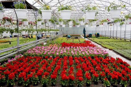 MÁV Budapesti virág termesztőtelep 2